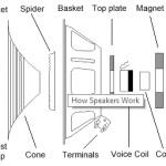 Speaker Damage Anatomy